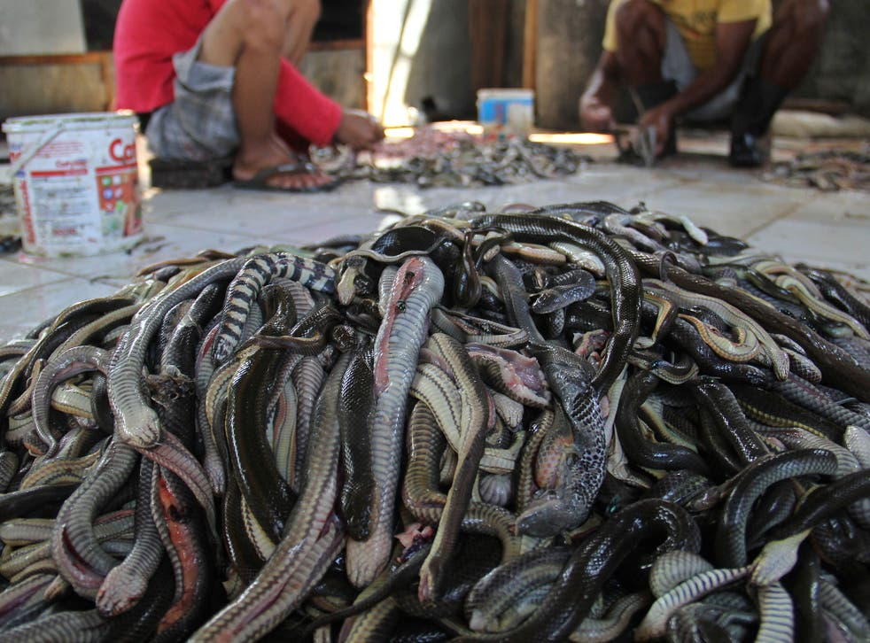 Workers prepare snake skins in the village of Kertasura, Cirebon. At slaughter house snake skins measuring in the hundreds of metres, are sold to bag factories in the West and Central Java provinces on a monthly basis