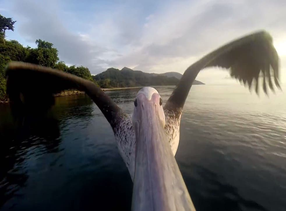A camera strapped to an injured bird's beak captures the moment it takes off for a triumphant return to the skies