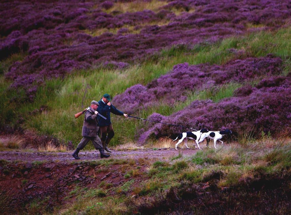 Grousekeepers in the Scottish Borders check the state of the moors before the shooting season