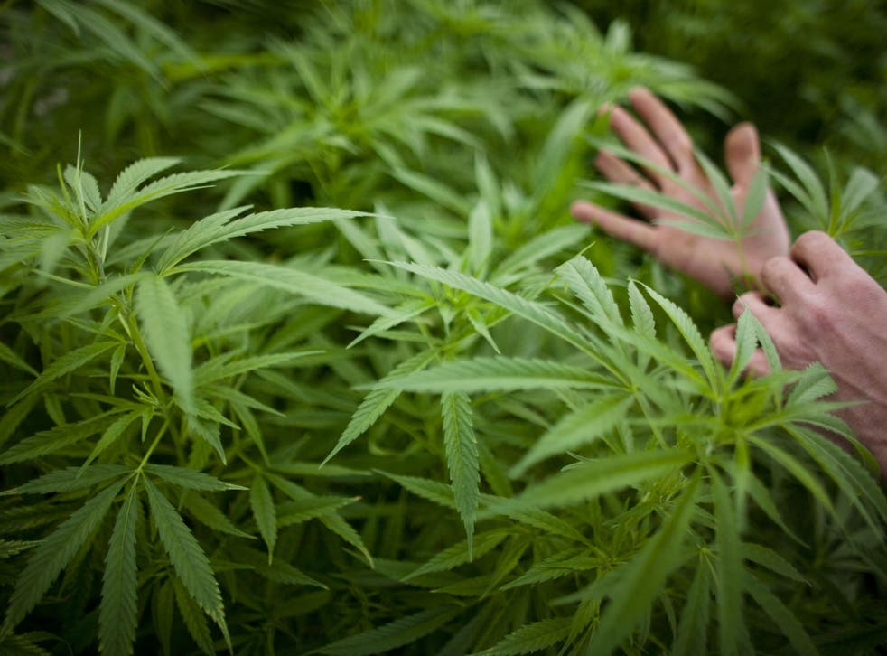 Compounds that occur naturally in the cannabis plant could be used to help treat dementia