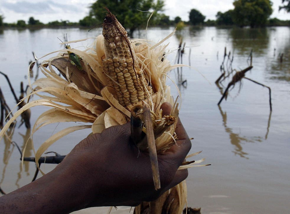 The report predicts that climate change will reduce median crop yields by 2 per cent per decade for the rest of the century