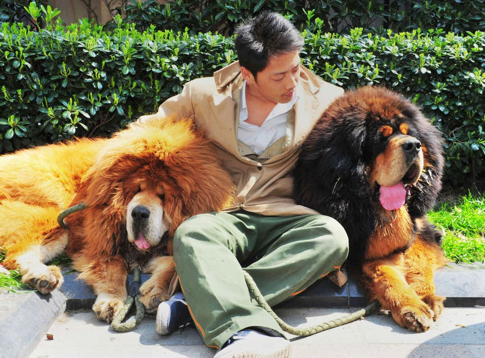 Fur trade: the two mastiffs said to have been bought by an unnamed Chinese property developer