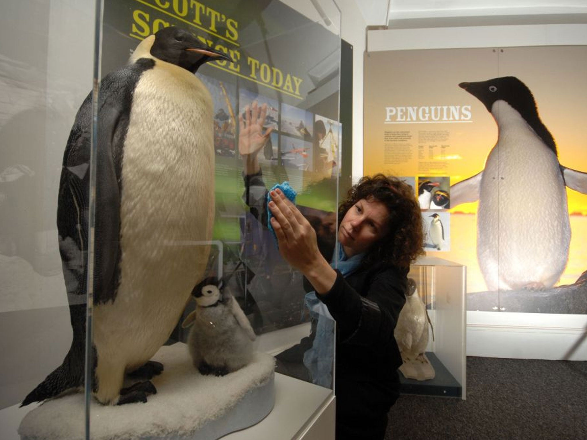 The Very Long March Of The Emperor Penguin The Independent