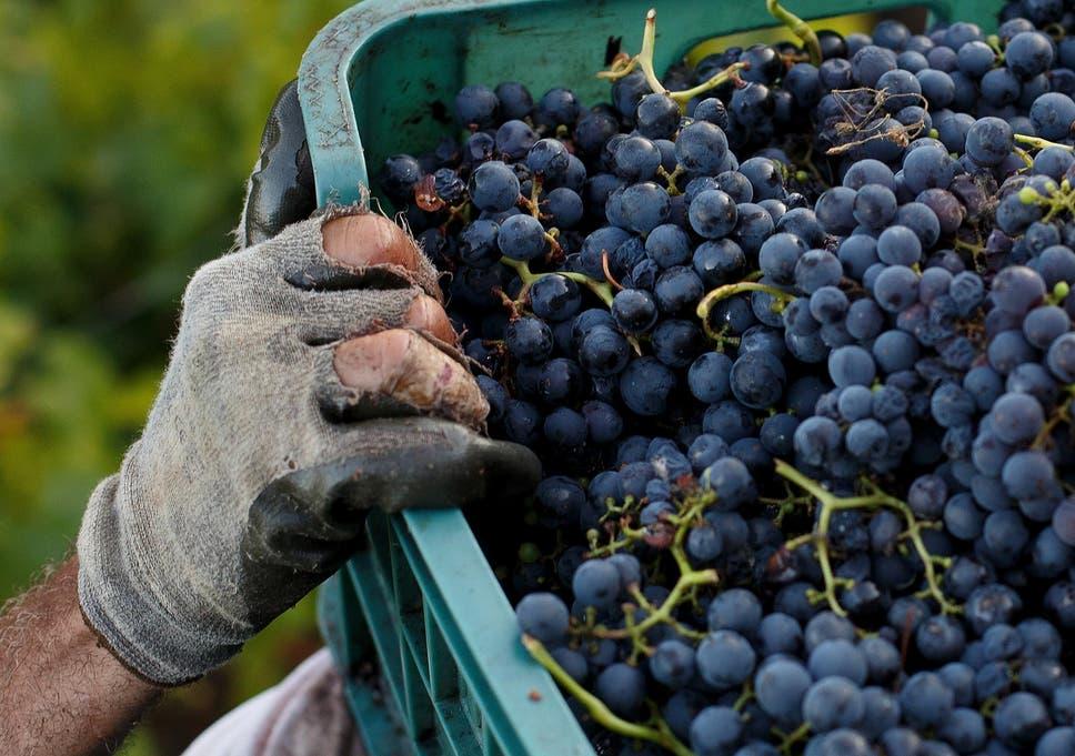 Pin-och noir or Sco-Vignon blanc? Say aye to Scottish wine