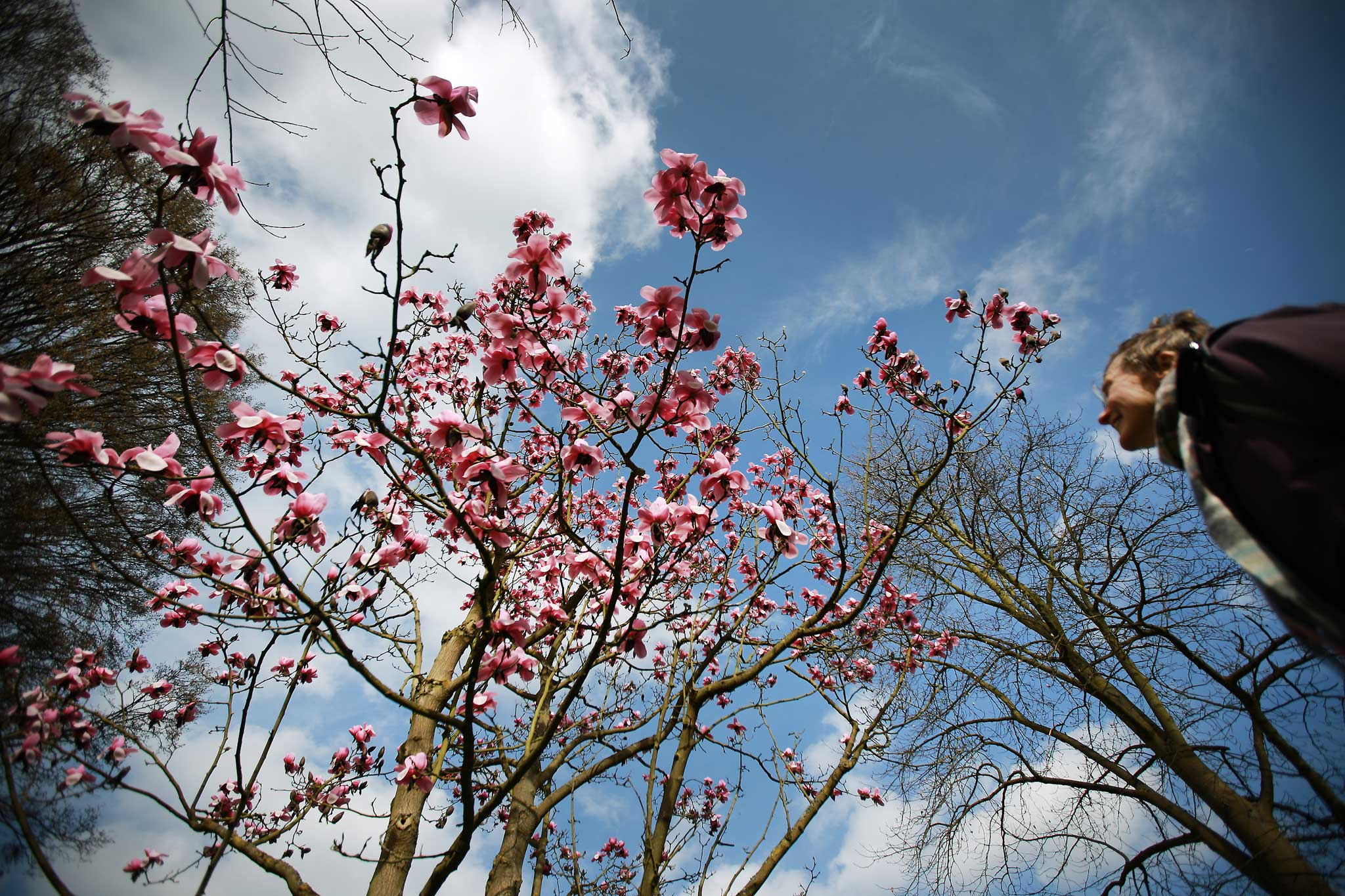 Emma Townshend Magnolias Can Block Out The Sun Thank Goodness For