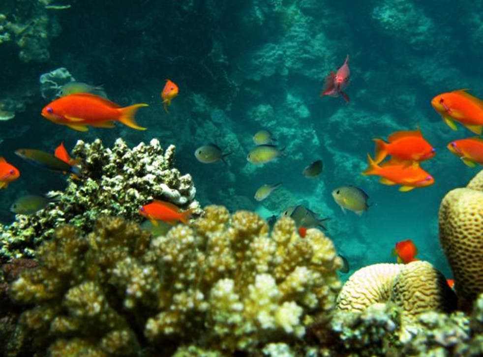 Coral reefs, home to one third of marine species are threatened by ocean acidification and human activities
