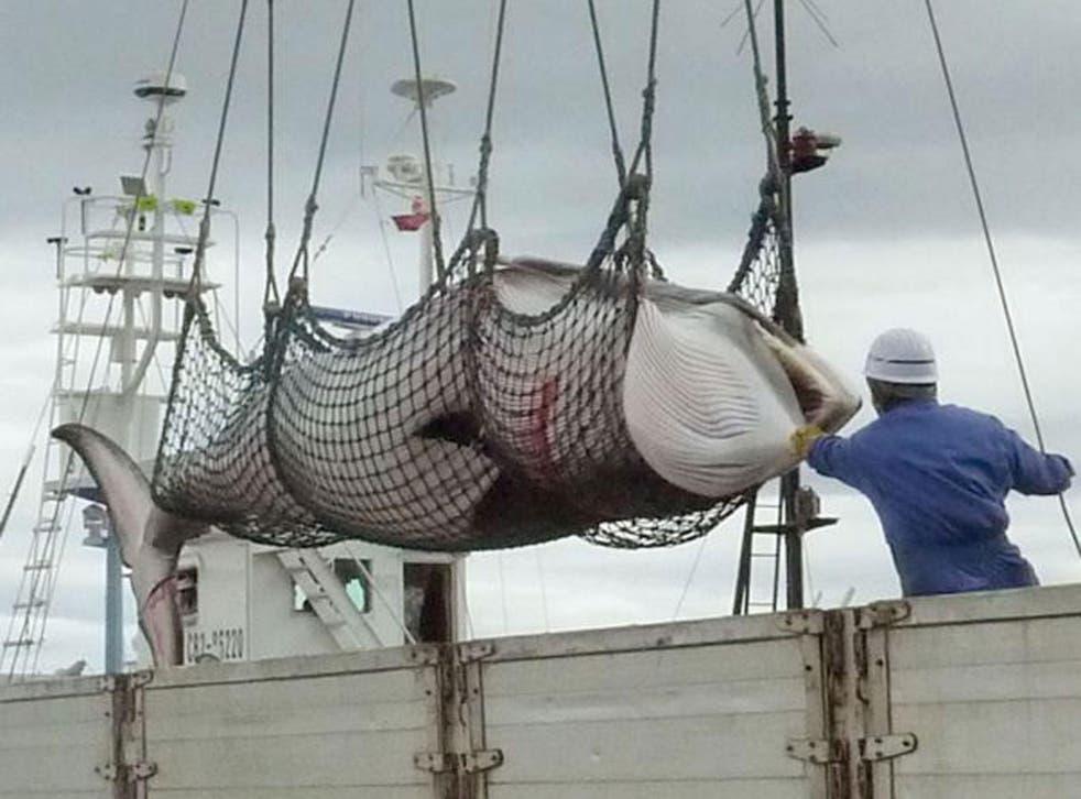 A dead minke whale is unloaded in Kushiro on the Japanese island of Hokkaido.