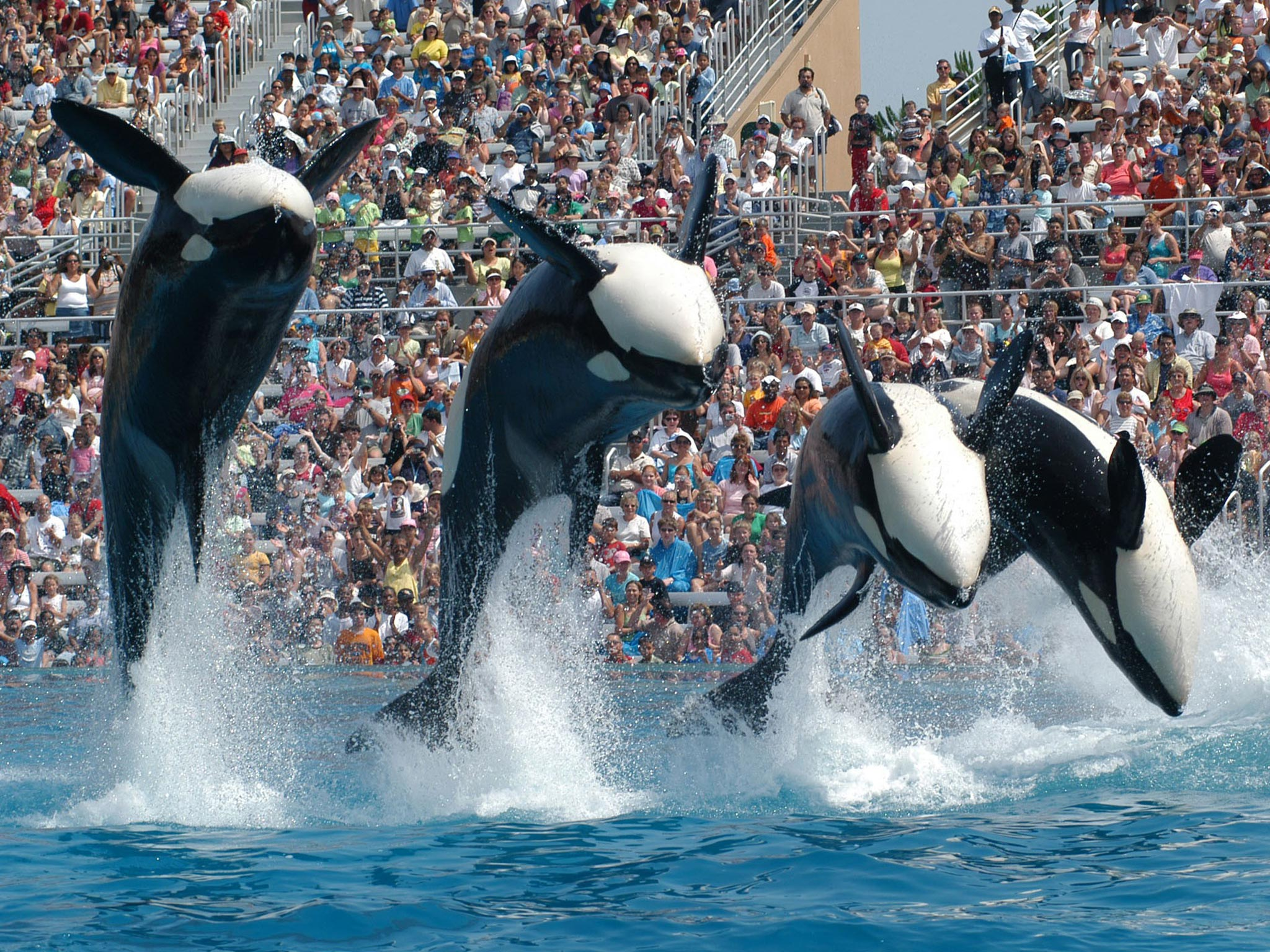 Seaworld To End Killer Whale Show In San Diego
