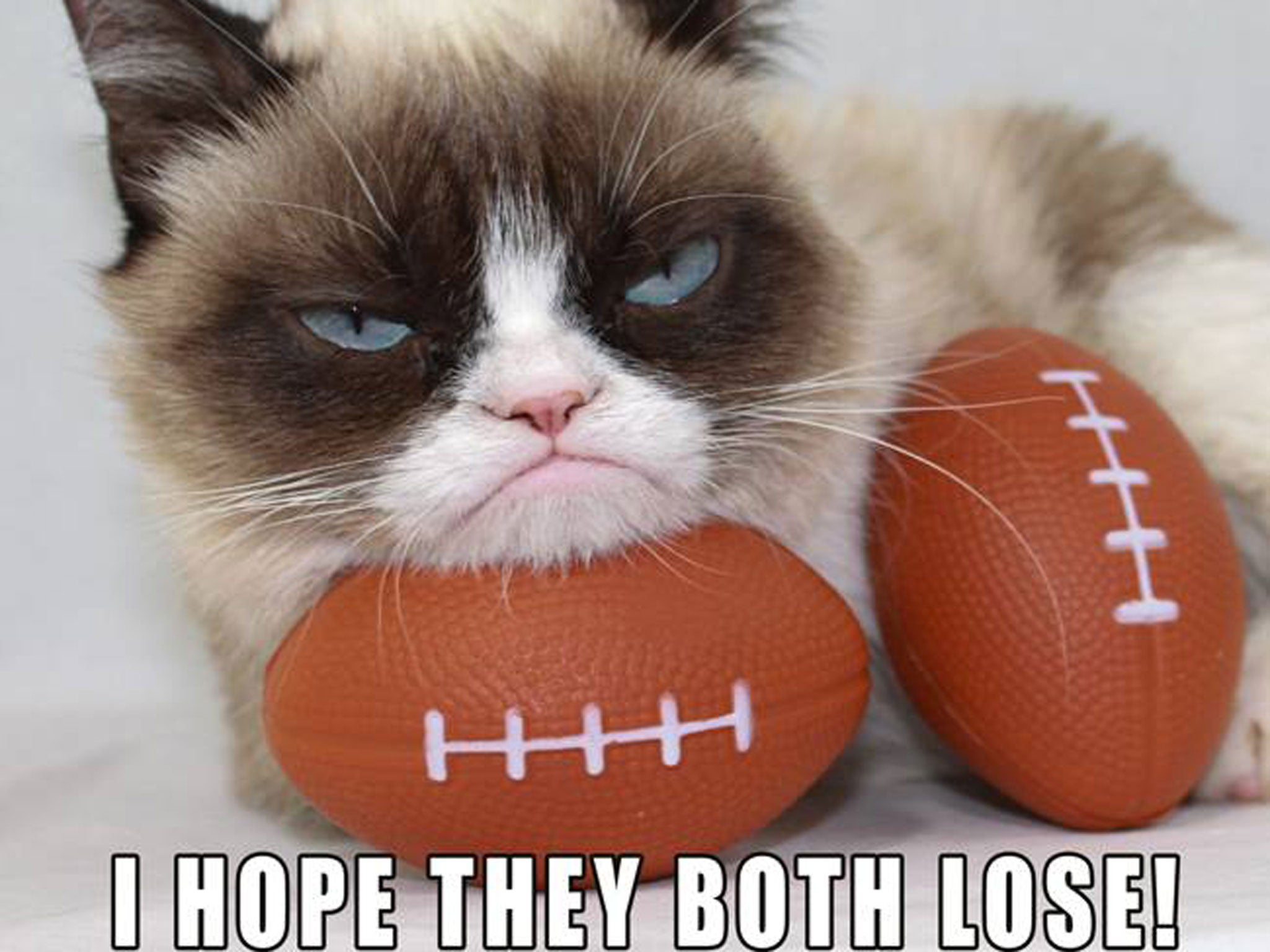 Image result for super bowl cat meme""