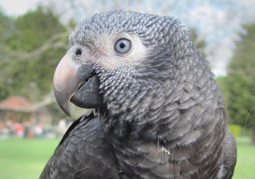 Woman convicted of husband's murder after parrot witness