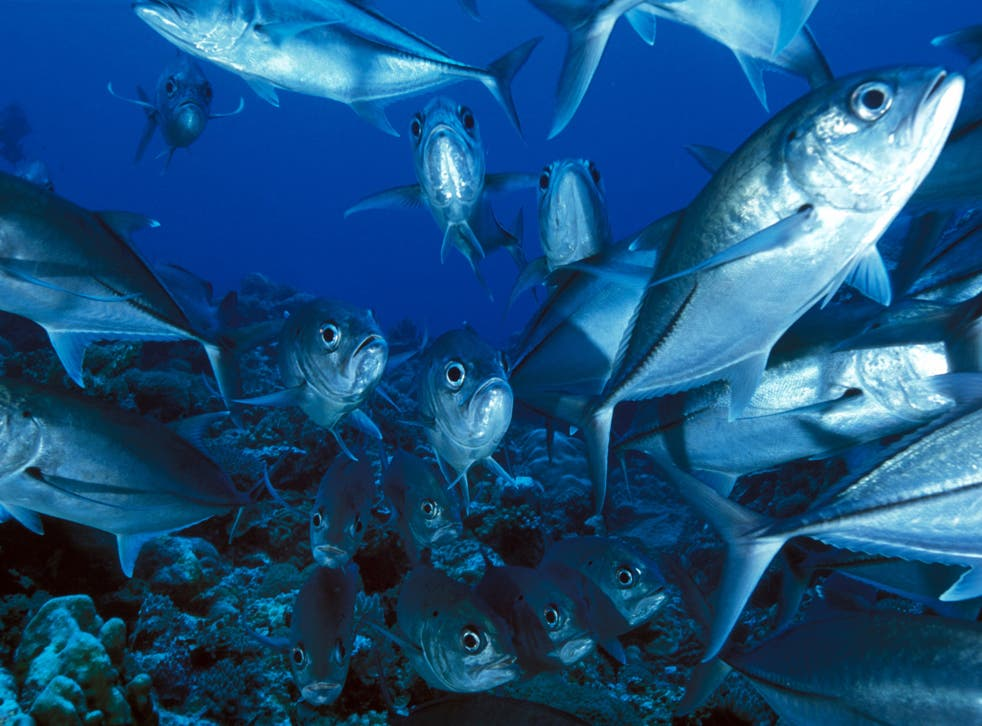 Fish could be rendered more vulnerable to predators by ocean acidification caused by carbon emissions, a report has found