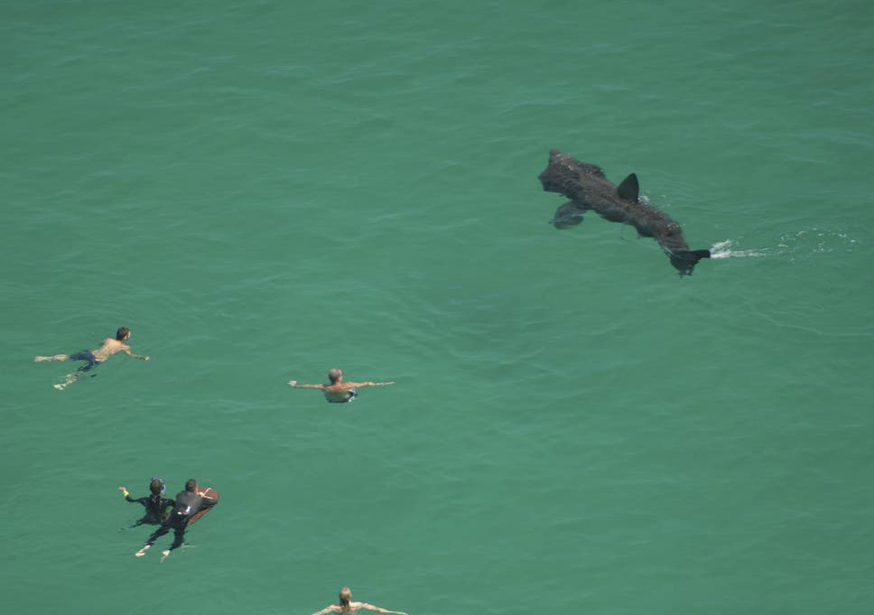 conservationists rejoice as cornwall is awash with basking sharks