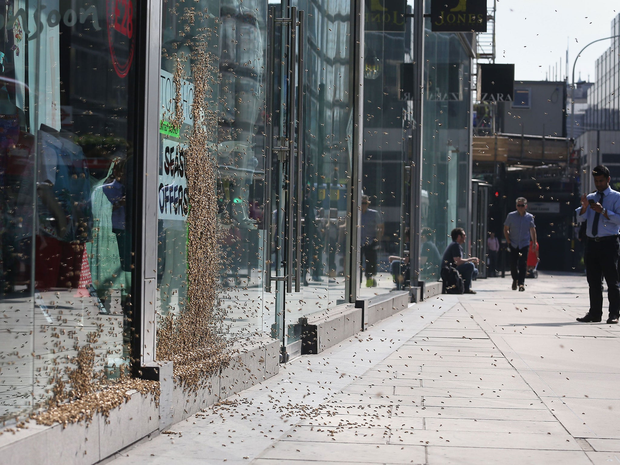 Swarms of flies plaguing residents in Cardiff traced to