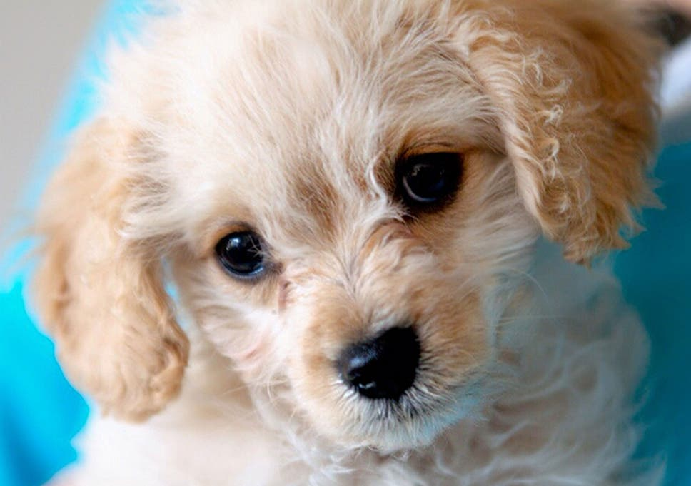 Puppy Room Set Up For Stressed University Of Central Lancashire