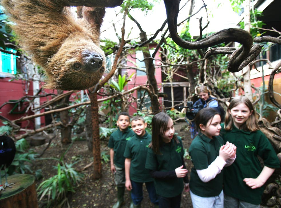 Close encounters with animals inspired pupils to write to much higher standards