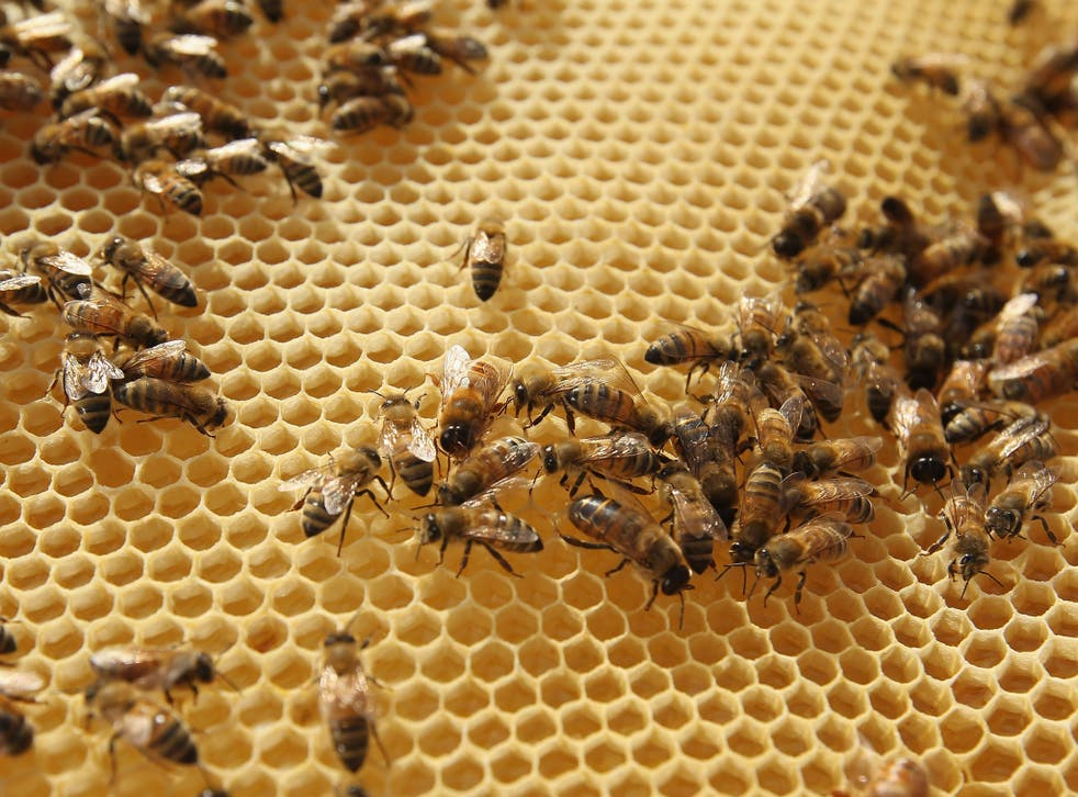 A colony of bees can be sold for around £500 on the black market