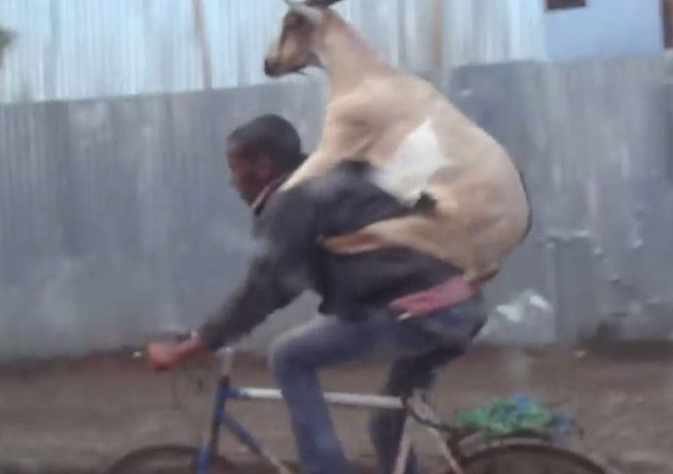 Goat Riding Man Riding Bike Caught On Film In Ethiopia The Independent