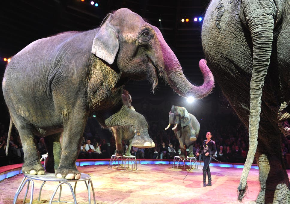 Dismay as proposed ban on circus animals is left out of