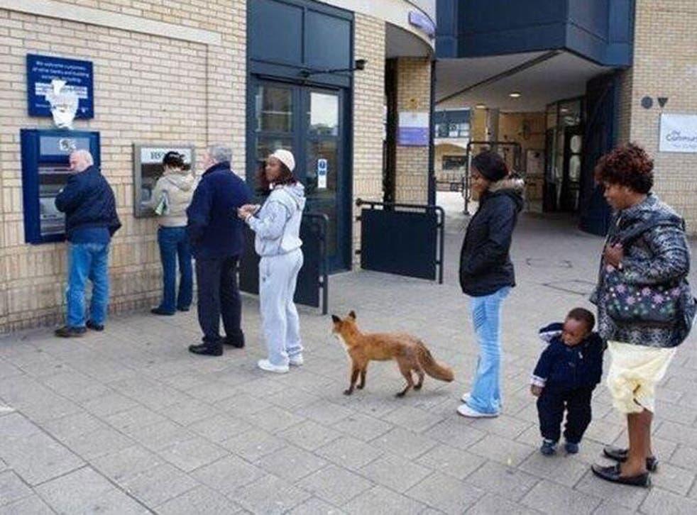 The fox was stuffed