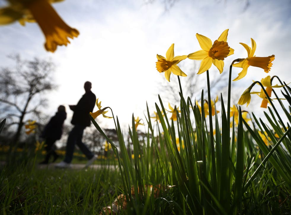 What will warmer winters do to Wordsworth's golden daffodils?