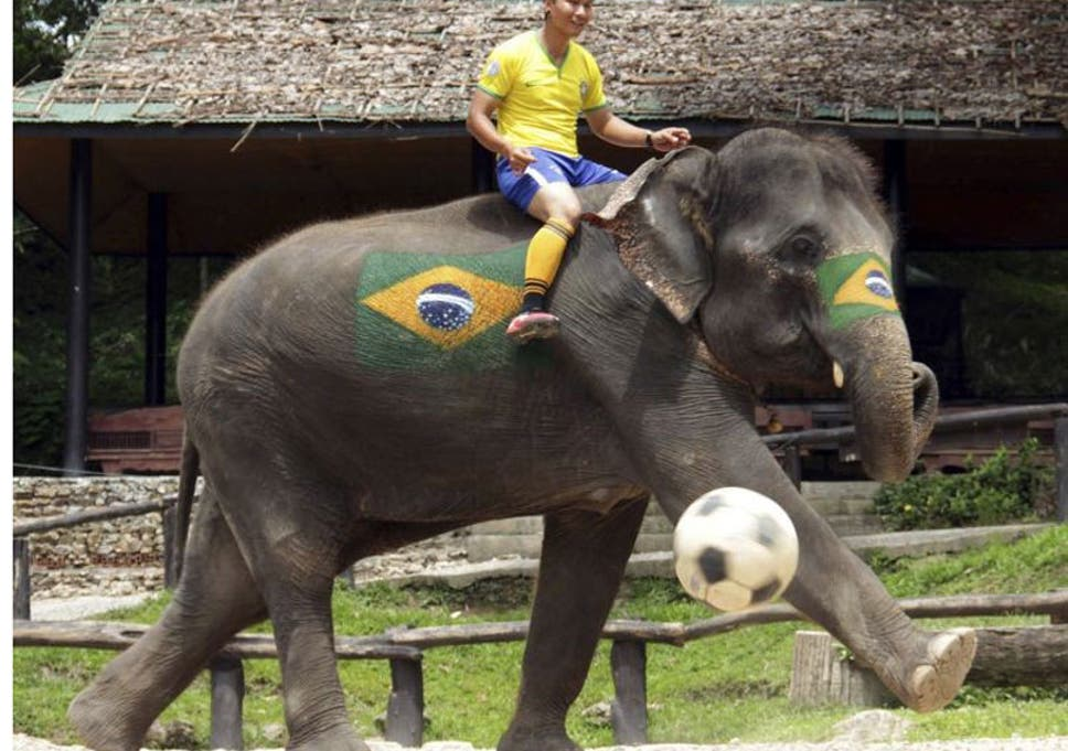World Cup 2014: Elephants show off ball skills in Thailand