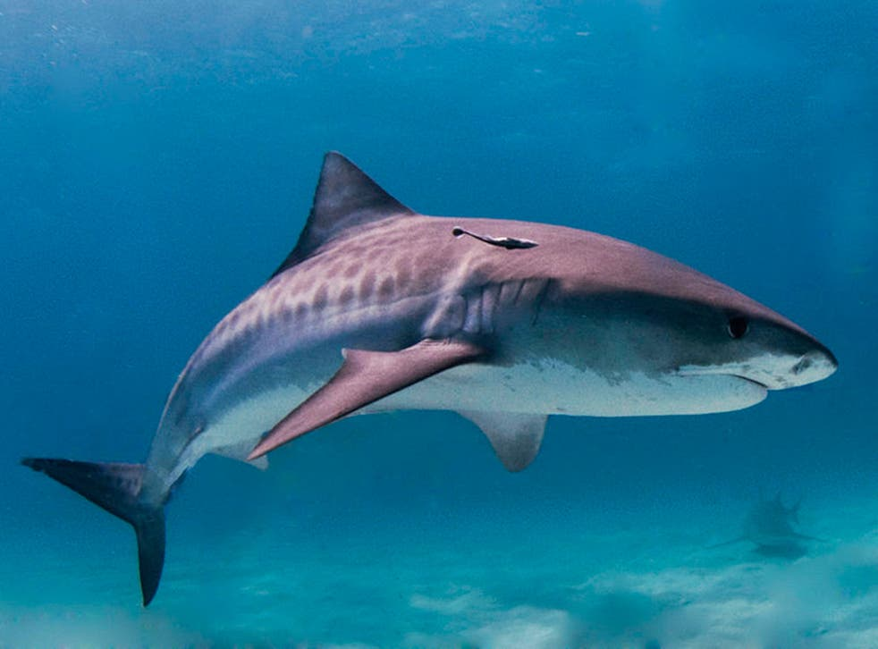 Officials in the Brazilian town of Recife, home to one of the most dangerous places to swim in the world, are ramping up shark attack warnings for football fans heading there for the 2014 World Cup