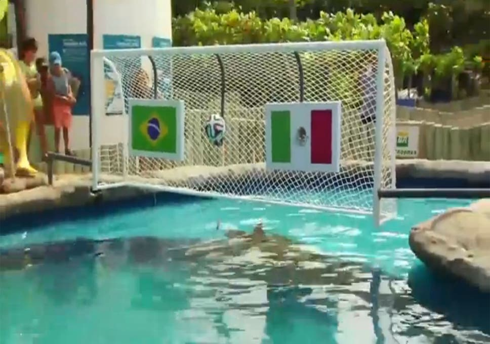 World Cup 2014 - Video: 'Psychic' turtle chooses Mexico to