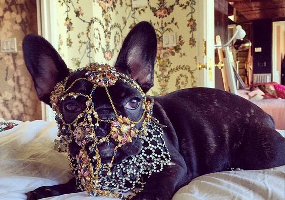 Gaga-Dog.JPG?w968h681