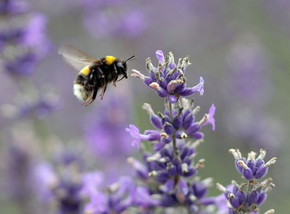 Neonics have been linked to the decline of bees
