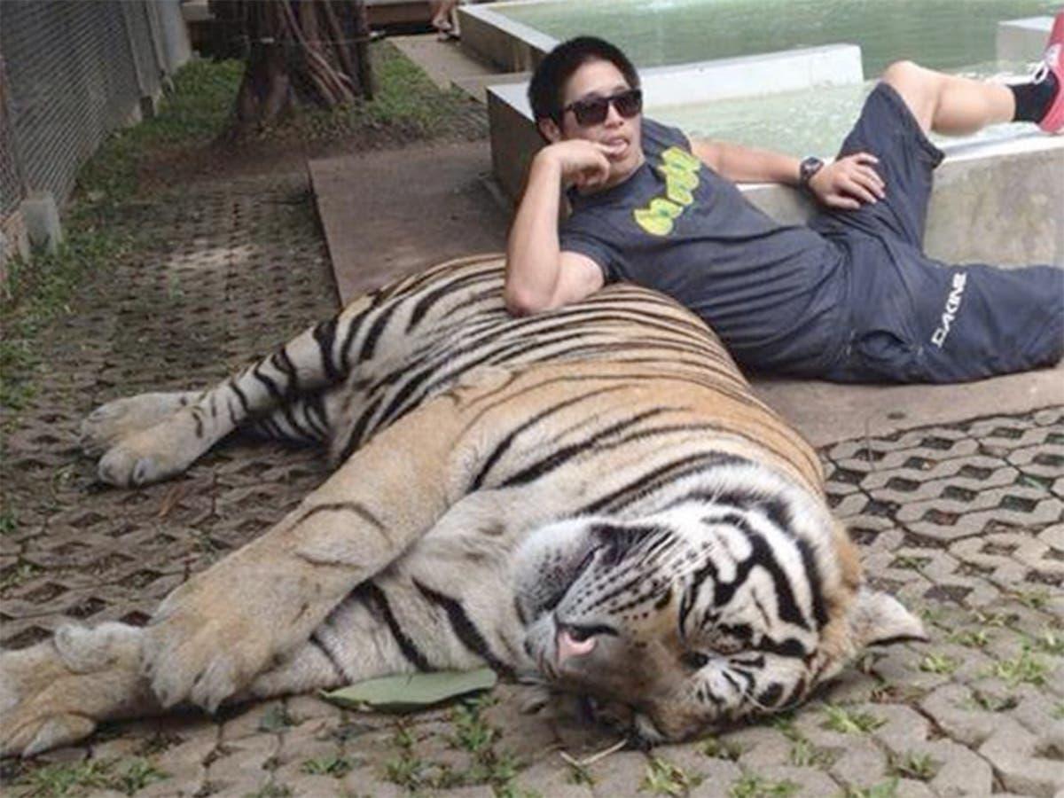 tiger dating site- ul wo trifft om single frauen în berlin