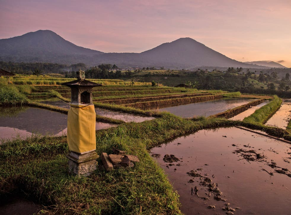 Rice fields in Tabanan, Bali, Indonesia. El Nino looms on the horizon which could lead into drought and lack of rainfall for the region