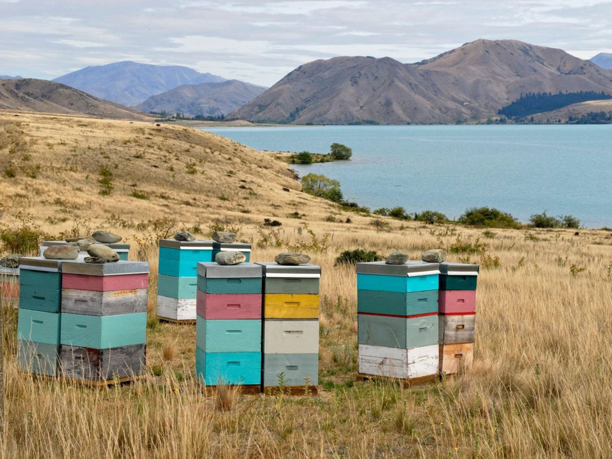 The manuka honey scandal