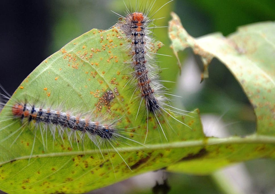 Bridge truss types a guide to dating and identifying caterpillars