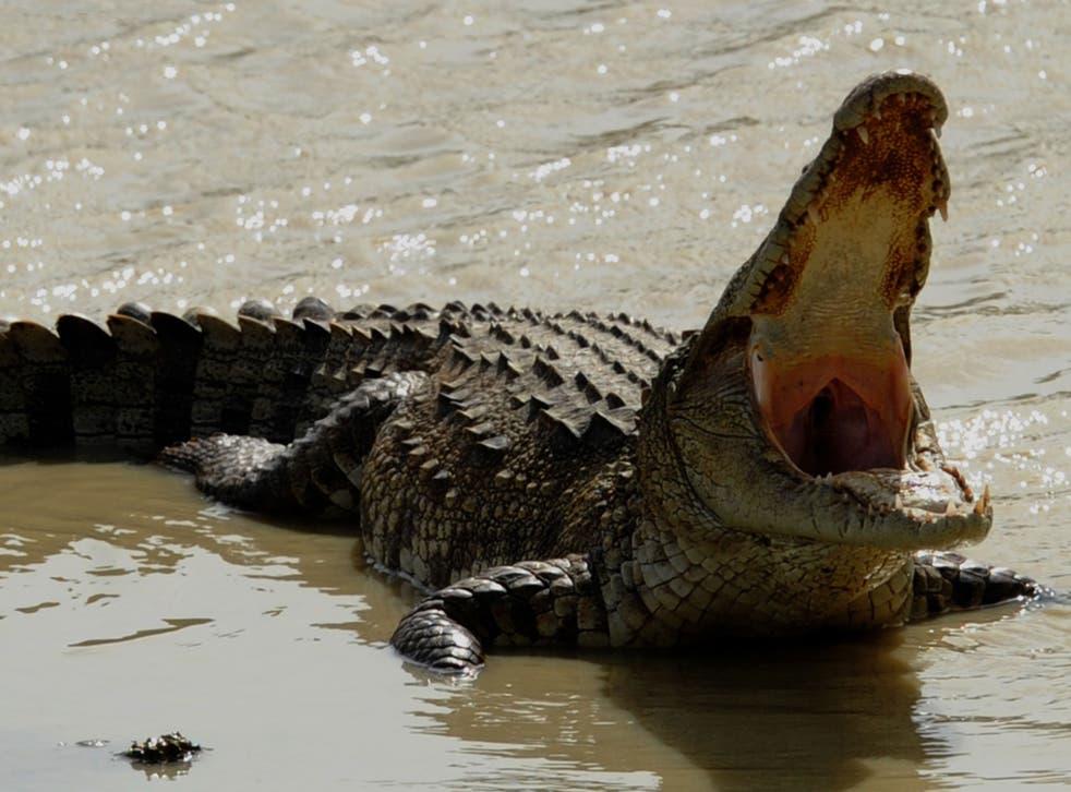 File image of a crocodile sunbathing on a river bank in the Yala National Park in Sri Lanka