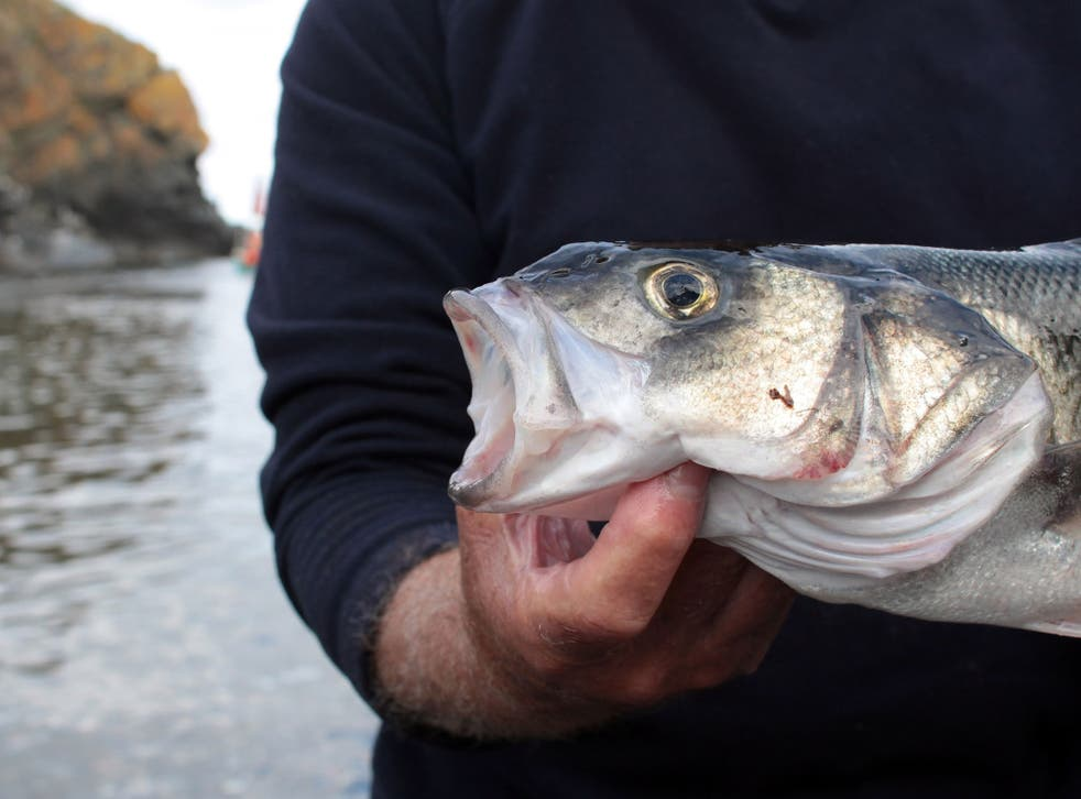 Recreational anglers are responsible for about a quarter of the wild sea bass catch