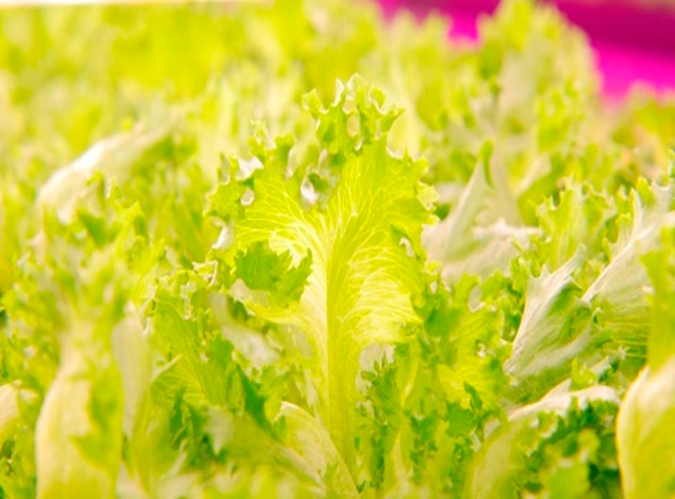 Britain's largest retailer Tesco has introduced a three-lettuce limit on icebergs