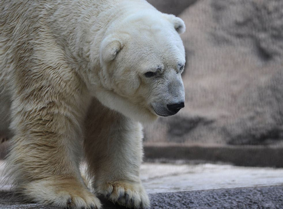 """Arturo has been called """"the world's saddest animal"""" after having to live in the boiling concrete enclosure for two decades"""