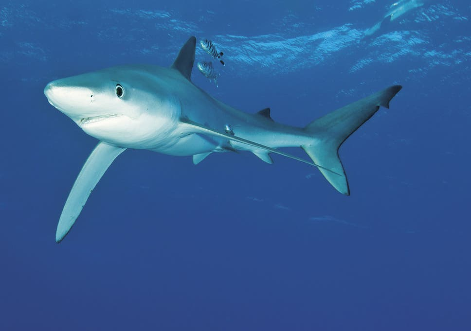 man suffers serious arm injury in shark attack on fishing boat in