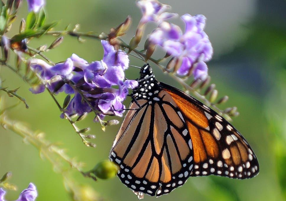 vital invertebrates decline by 45 per cent study finds the