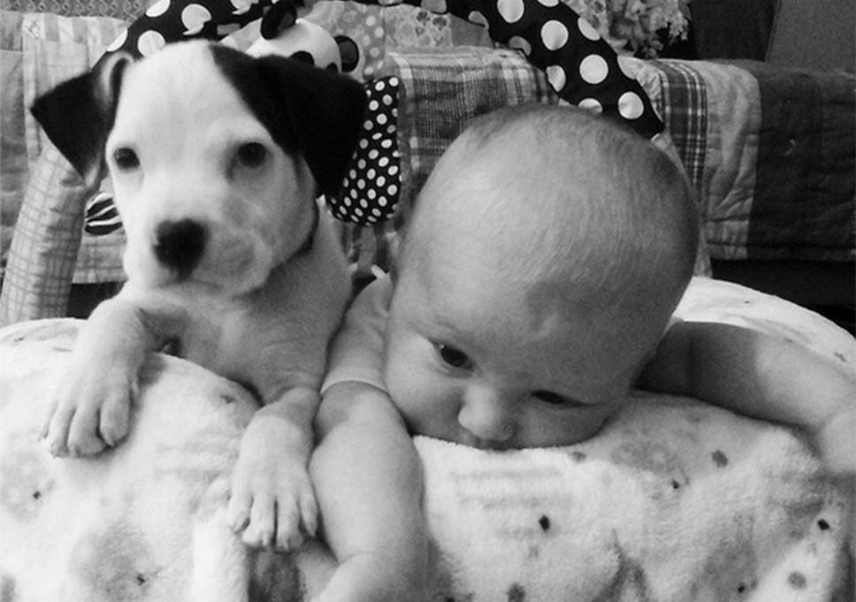 internet melts as puppy crawls into baby s bed and cuddles up the