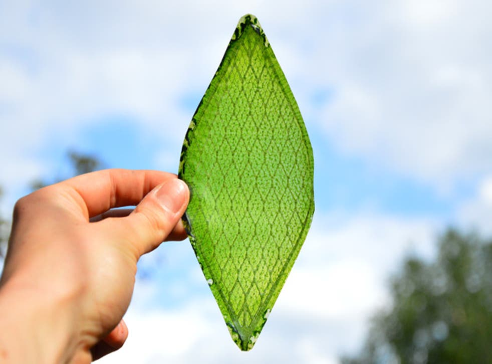 The Silk Leaf project