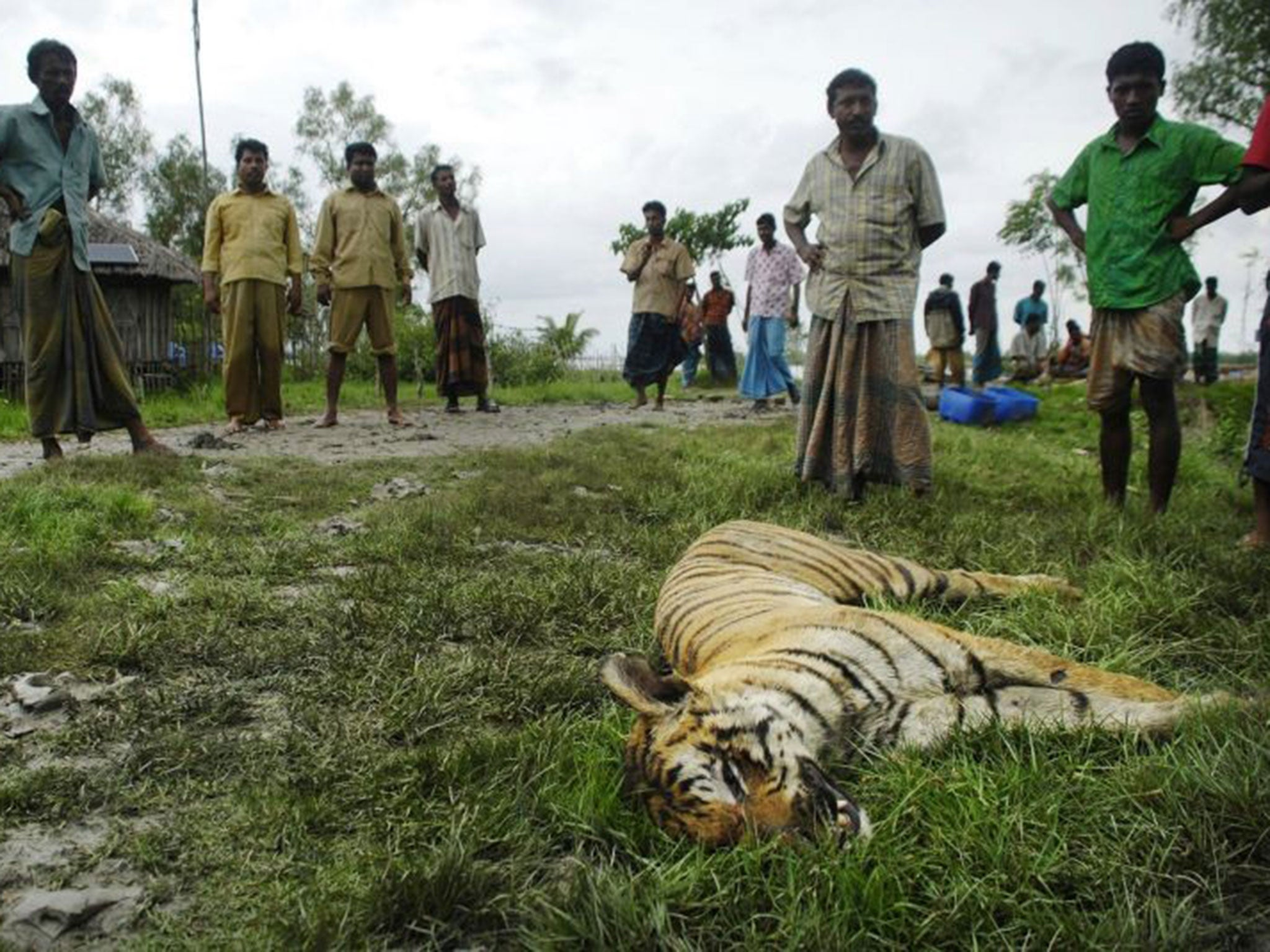 save the tiger learning to live with dangerous neighbours the