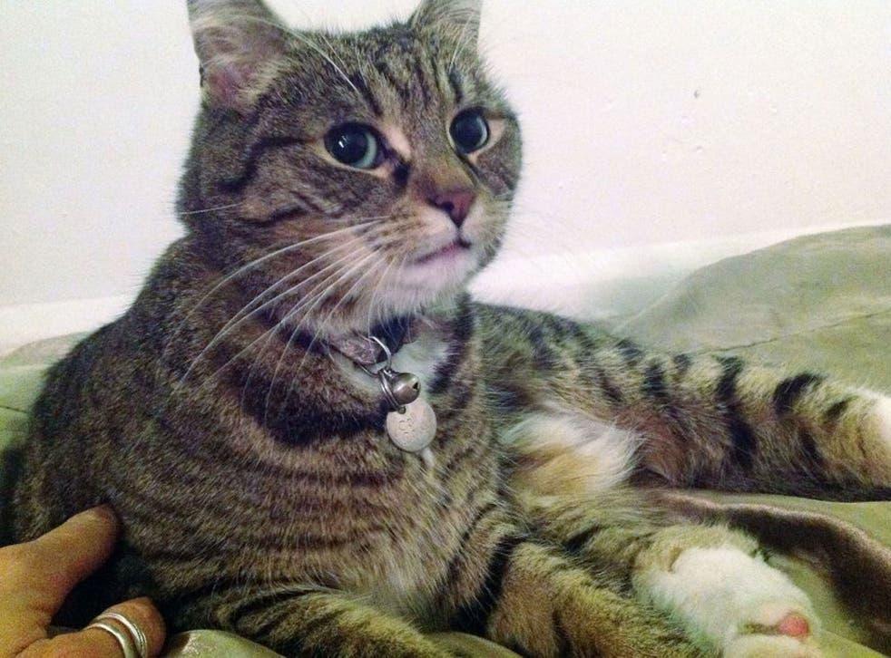 George Osborn's cat Freya was struck by a car on Downing Street last night