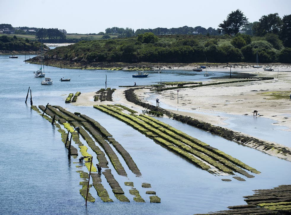French oyster farmers in places such as Étel, in Brittany, are seeing stocks denuded by disease