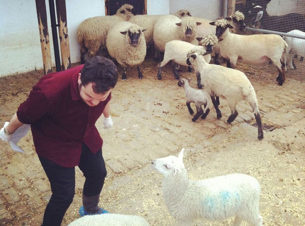King Lear With Sheep is an 'uncategorisable delight'