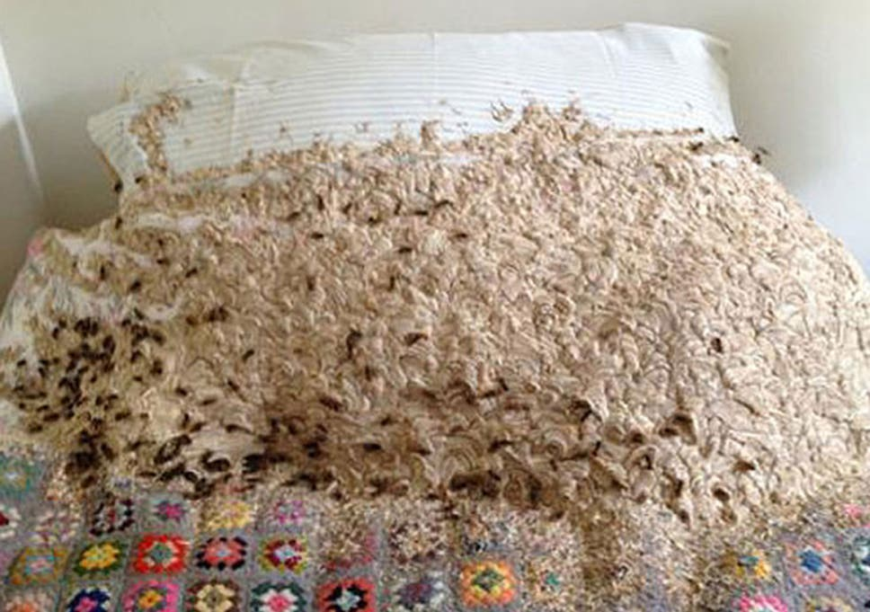 enormous wasps nest covering bed found in woman s spare room the