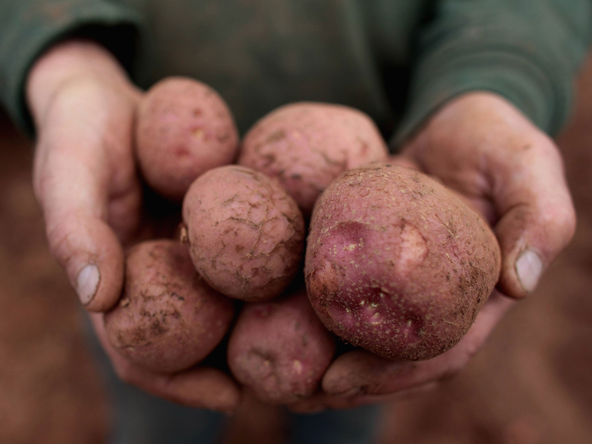 Potatoes Could Be Off The Menu As Crop Pests Threaten Uk The Independent