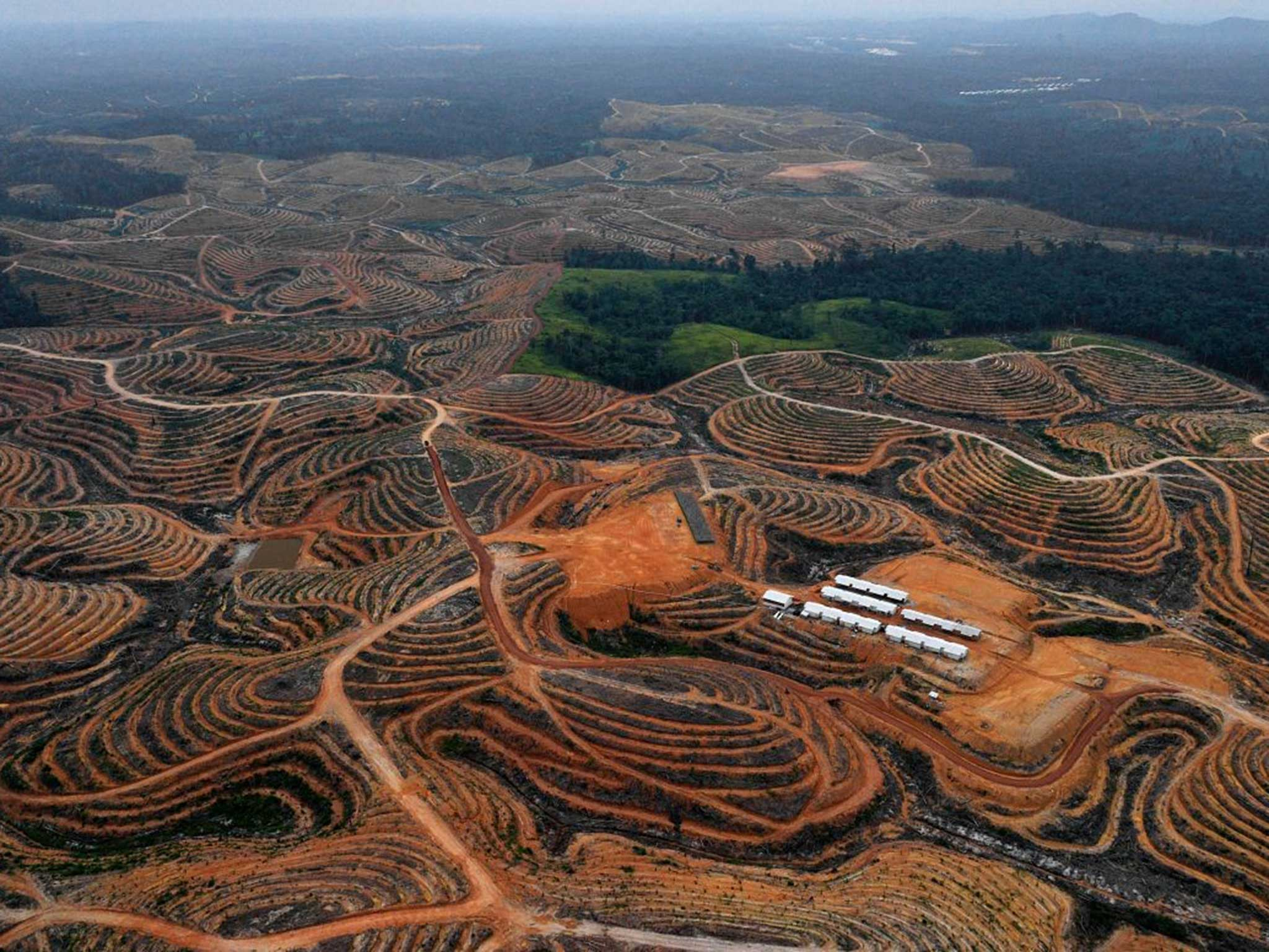 stop destroying the amazon rainforest the worlds greatest natural resource