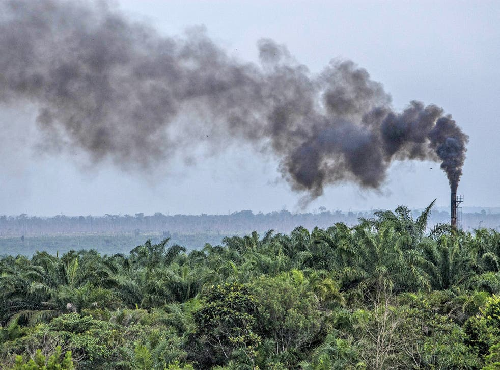 The expansion of palm oil plantations in Indonesia has increased greenhouse gas emissions
