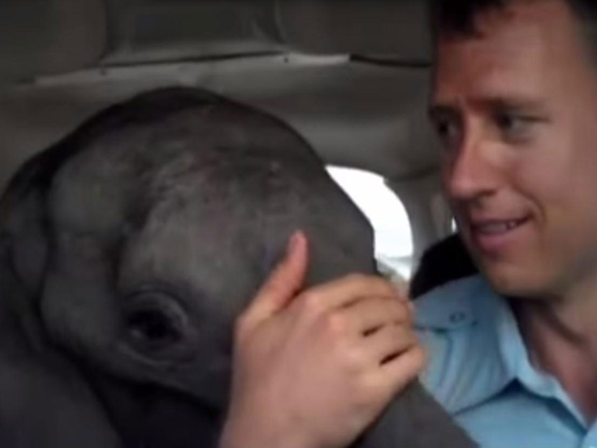 Pilot rescues baby elephant who survived massacre - by flying it home in four-seater plane